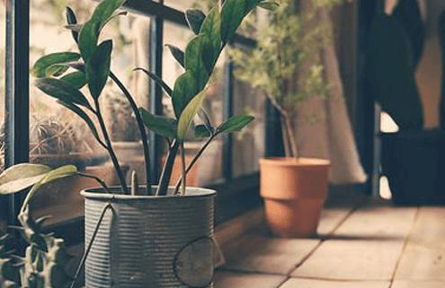 evde bitki yetiştirme