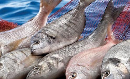 Cassia Tarçın - İlave Şeker ve Civa İçeren Balıklar